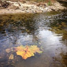 Autumn on Proctor Creek in the Monroe Height neighborhood
