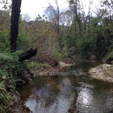 Proctor Creek near Jackson Pkwy