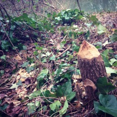 A beaver in Center Hill Park has been hard at work on the side of a Proctor Creek tributary