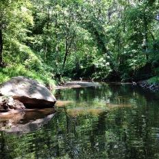 Deep greens on the creek