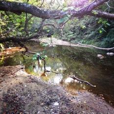 Proctor Creek tributary in the Grove Park neighborhood