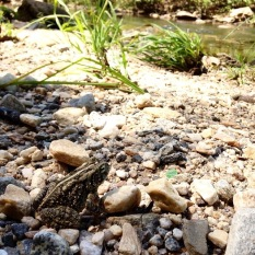 Frog on the Proctor Creek bank