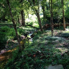 A tributary emerges in Lindsay Street Park
