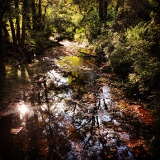 Reflections in Proctor Creek