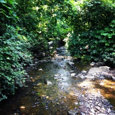 Proctor Creek's tributaries spread throughout NW Atlanta. Here's one in the West Highlands neighborhood